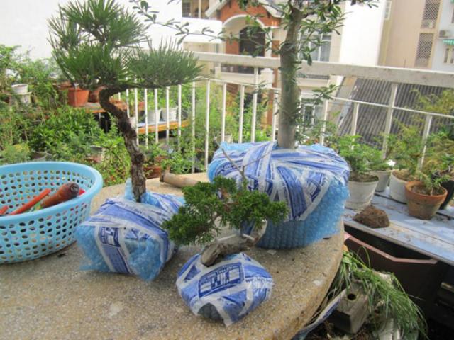 Những cây thân mọng cần khéo léo trong quá trình đóng gói