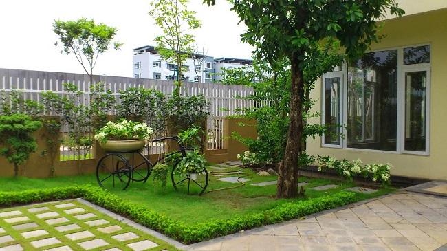 Cây cảnh giúp trang trí cho ngôi nhà của bạn thêm tươi mát, thân thiện và sinh động