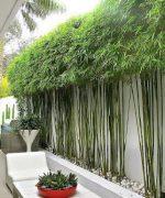 Loại cây này mang vẻ đẹp mềm mại, uyển chuyển, dễ dàng sinh tồn trong môi trường khắc nhiệt