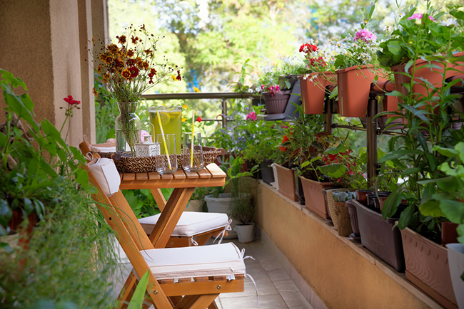 Những lưu ý khi trồng cây trong căn hộ chung cư bạn cần biết